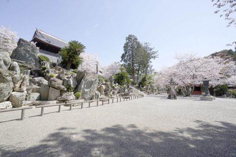 桜に彩られた粉河寺庭園